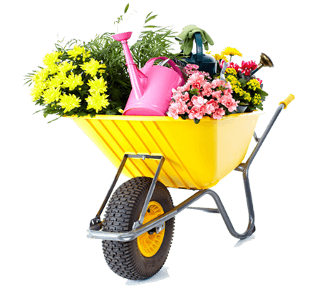 achete-fleurs-pepinier-pepinieredelillois-lillois