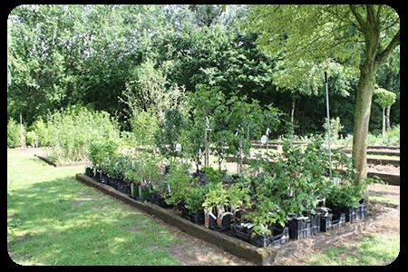 arbres-fruitiers-nos-plante-pepinier-pepinieredelillois-lillois