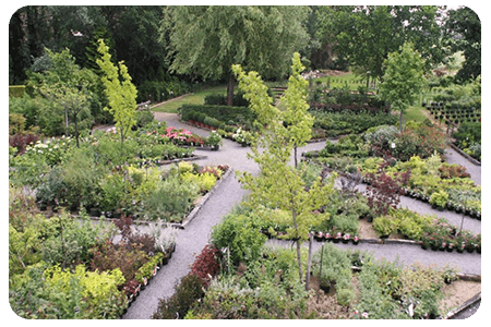arbuste-nos-plante-pepinier-pepinieredelillois-lillois