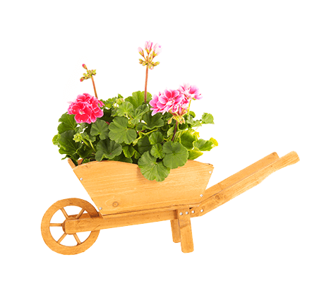 decouvrez-jardins-professionnels-pepinier-pepinieredelillois-lillois