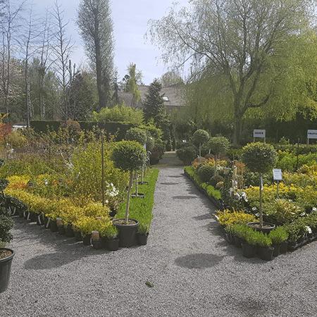 galerie2-printemps-pepinier-pepinieredelillois-lillois