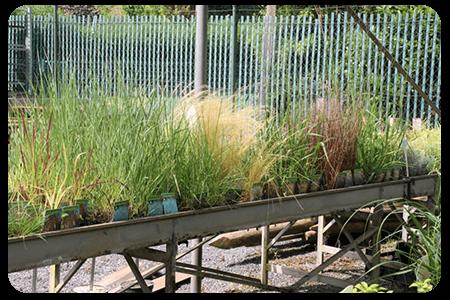 graminees-nos-plante-pepinier-pepinieredelillois-lillois