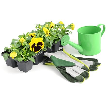 nos-plantes-pepinier-pepinieredelillois-lillois