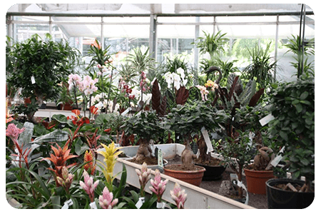 plante-interieur-nos-plante-pepinier-pepinieredelillois-lillois