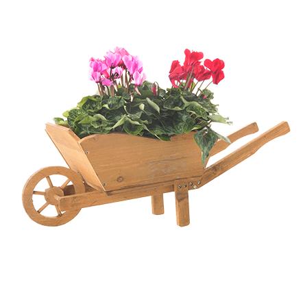specifique-plante-pepinier-pepinieredelillois-lillois